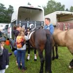 Alle helfen beim Fertigmachen der Ponys.
